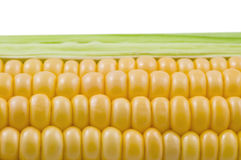 Closeup of corn cob isolated. On white background royalty free stock photos
