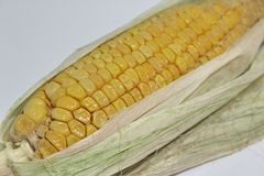 Closeup of the corn cobs with corn leaves