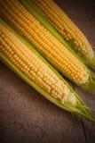 Closeup of corn  cobs Stock Photos
