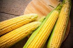Closeup of corn  cobs Stock Image
