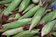 Closeup corn on the stalk in the corn field Stock Image