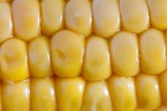 Closeup of a corncob Stock Image