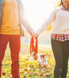 Closeup on couple holding leash together in autumn park Stock Photos