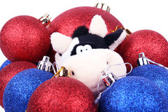 Closeup Cow In New Year Balls 2009 Royalty Free Stock Photography