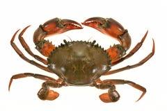 Closeup Of A Crab Stock Photography