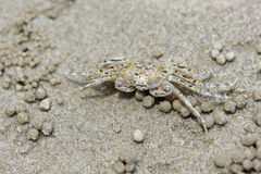Closeup of a crab on a sandy beach in Krabi Stock Images