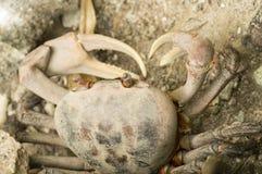 Closeup crab in Seychelles Stock Image