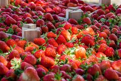 Closeup of a crate with fresh strawberries royalty free stock images