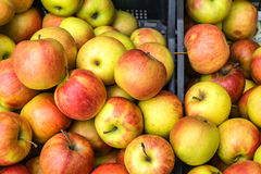 Closeup of crates of juicy, fresh, ecologically produced apples, Stock Photos