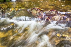 Closeup of a creek in forest Stock Photos