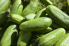 Closeup on cucumber Stock Photo