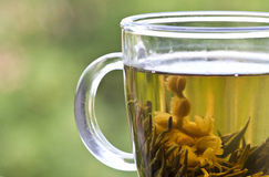 Closeup with cup of green tea Royalty Free Stock Image