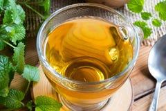 Closeup of a cup of melissa tea with fresh melissa leaves. Closeup of cup of melissa lemon balm tea on a table with fresh melissa leaves in the background stock photos