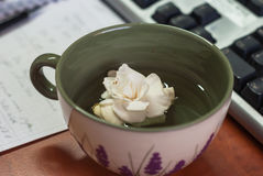 Closeup of a cup with white flower on the desk in office, ke Stock Photos