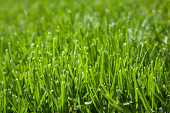 Closeup of cut grass Stock Photo