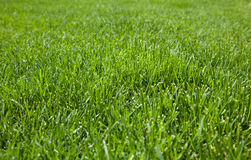 Closeup of cut grass Stock Photography