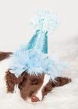 Closeup Cute Birthday Pupp Royalty Free Stock Photos