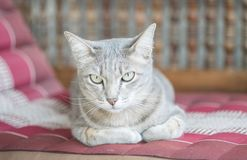 Closeup cute cat sit on blurred wood chair in front of house background. Closeup cute cat sit on blurred wooden chair in front of house background Royalty Free Stock Photos