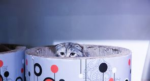 Closeup of cute cats. That are in a relaxed position royalty free stock photography
