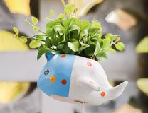 Closeup of cute colorful flowerpot with green leaves stock photo