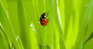 Closeup of cute ladybug Stock Photos