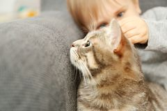 Closeup of cute little boy with fluffy cat on grey  armchair Stock Images