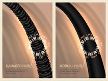 Closeup damaged harsh and normal healthy hair. Vector illustration for haircare concept Royalty Free Stock Images