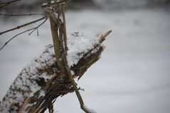 Closeup of a dead snow covered branch royalty free stock images