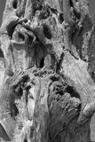 Closeup on a Dead Tree Royalty Free Stock Images