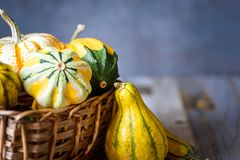 Closeup of decorative gourds and pumpkins in a basket on natural rustic wooden background.  Stock Image