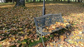 Closeup decorative park bench autumn maple tree leaves move wind stock footage