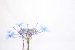 Closeup of delicate blue flower in a glass bottle Stock Photos