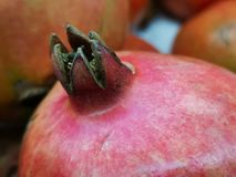 A closeup of a delicious pink, Indian pomegranate, detailing its top crown. royalty free stock photo
