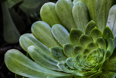 Closeup of a desert plant after rain Stock Image