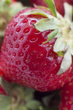 Closeup detail of a fresh red strawberry Royalty Free Stock Photography