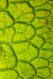 Closeup detail of leaf Stock Images