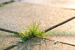 Free Closeup Detail Of Weed Green Plant Growing Between Concrete Pavement Bricks In Summer Yard Royalty Free Stock Photos - 181197318