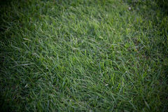 Closeup detail of texture in green grass lawn. Dramatic lightening stock photos