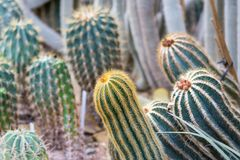 Closeup detail view of cactus plant in botany garden stock image
