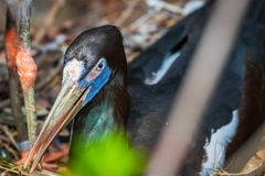 Closeup and detailed shot of beautiful and colorful florida bird stock photos