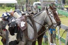 Closeup details of saddled up horses Royalty Free Stock Images