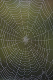 Closeup of a dew-covered spider web Royalty Free Stock Image