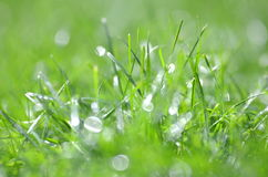 Closeup of dewed grass with bokeh Stock Photography