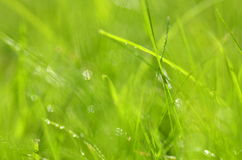 Closeup of dewed grass with bokeh. Effect Stock Photo