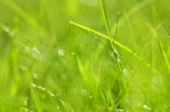 Closeup of dewed grass with bokeh Stock Photo