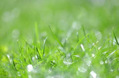 Closeup of dewed grass with bokeh. Effect Royalty Free Stock Photography