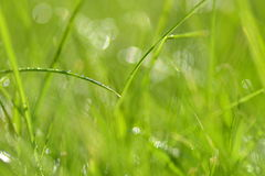 Closeup of dewed grass with bokeh Royalty Free Stock Photography