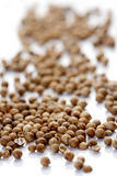 Closeup of died mustard seeds Stock Photography