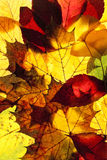 Closeup of Different Autumn Leaves Stock Photo