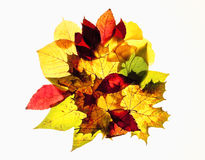 Closeup of Different Autumn Leaves Stock Photos